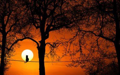 אמונה,חתול,שקיעה,עצים,חבל,חתול יושב על חבל בשקיעה